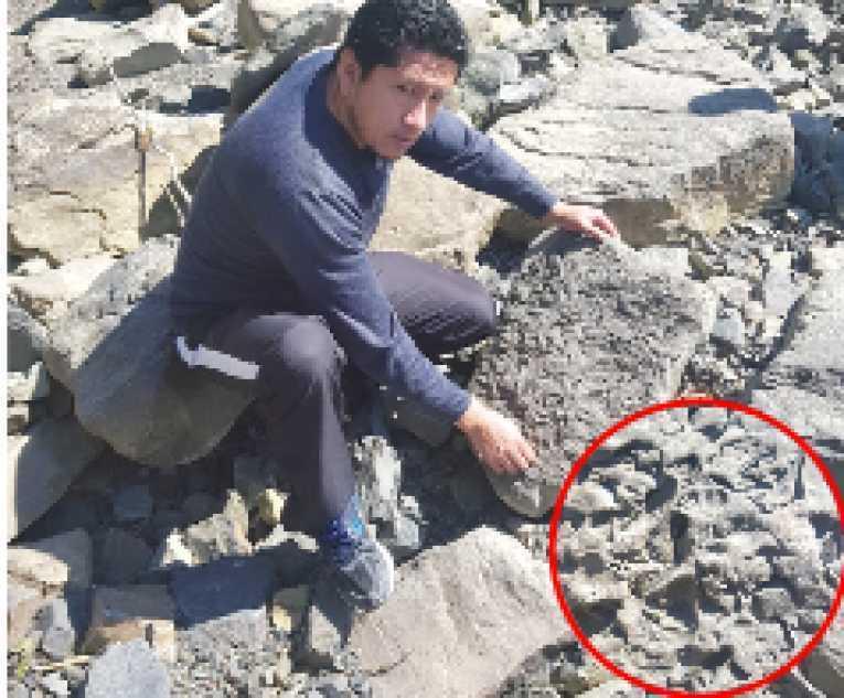 Hallan restos paleontológicos en un río de Colomi y prevén estudio - Opinión Bolivia